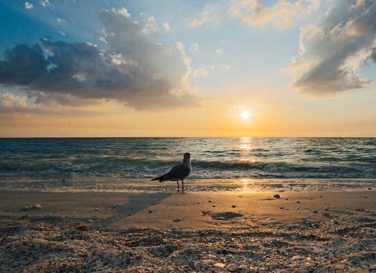Genesis Chapter 7 & 8 – Pastor James